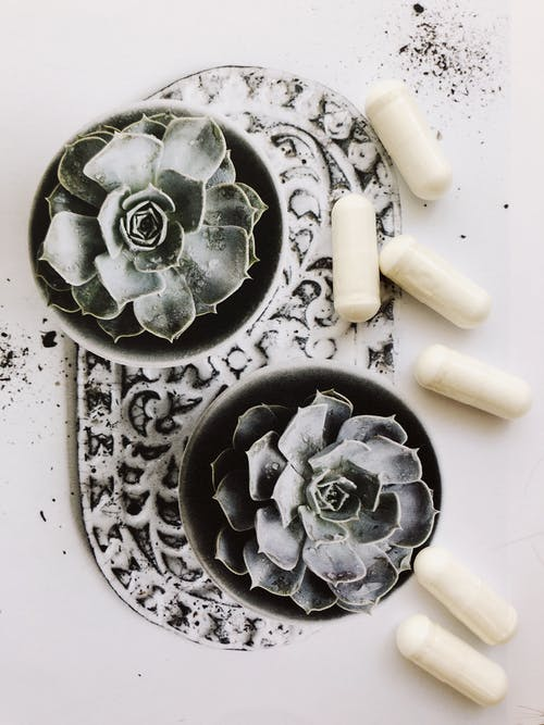 Bunch of white capsules placed near potted succulent plants