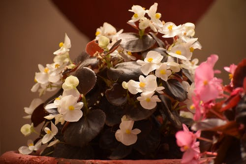 Darmowe zdjęcie z galerii z flora, kolor, kolorowy, kwiat