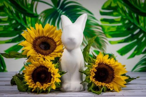 Kostnadsfri bild av anläggning, blommar, blommor