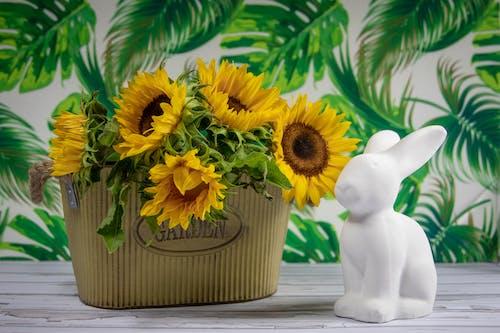 Kostnadsfri bild av anläggning, blommor, blomning