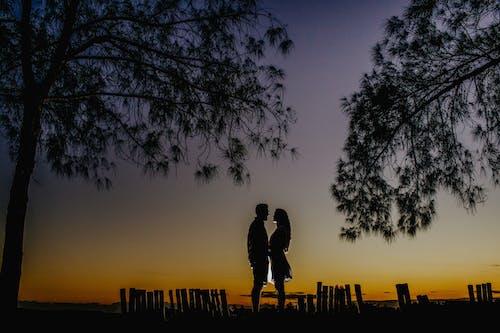 ağaç, akşam, alaca karanlık, anonim içeren Ücretsiz stok fotoğraf