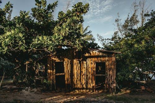 Foto d'estoc gratuïta de a l'aire lliure, abandonat, arbre, arquitectura
