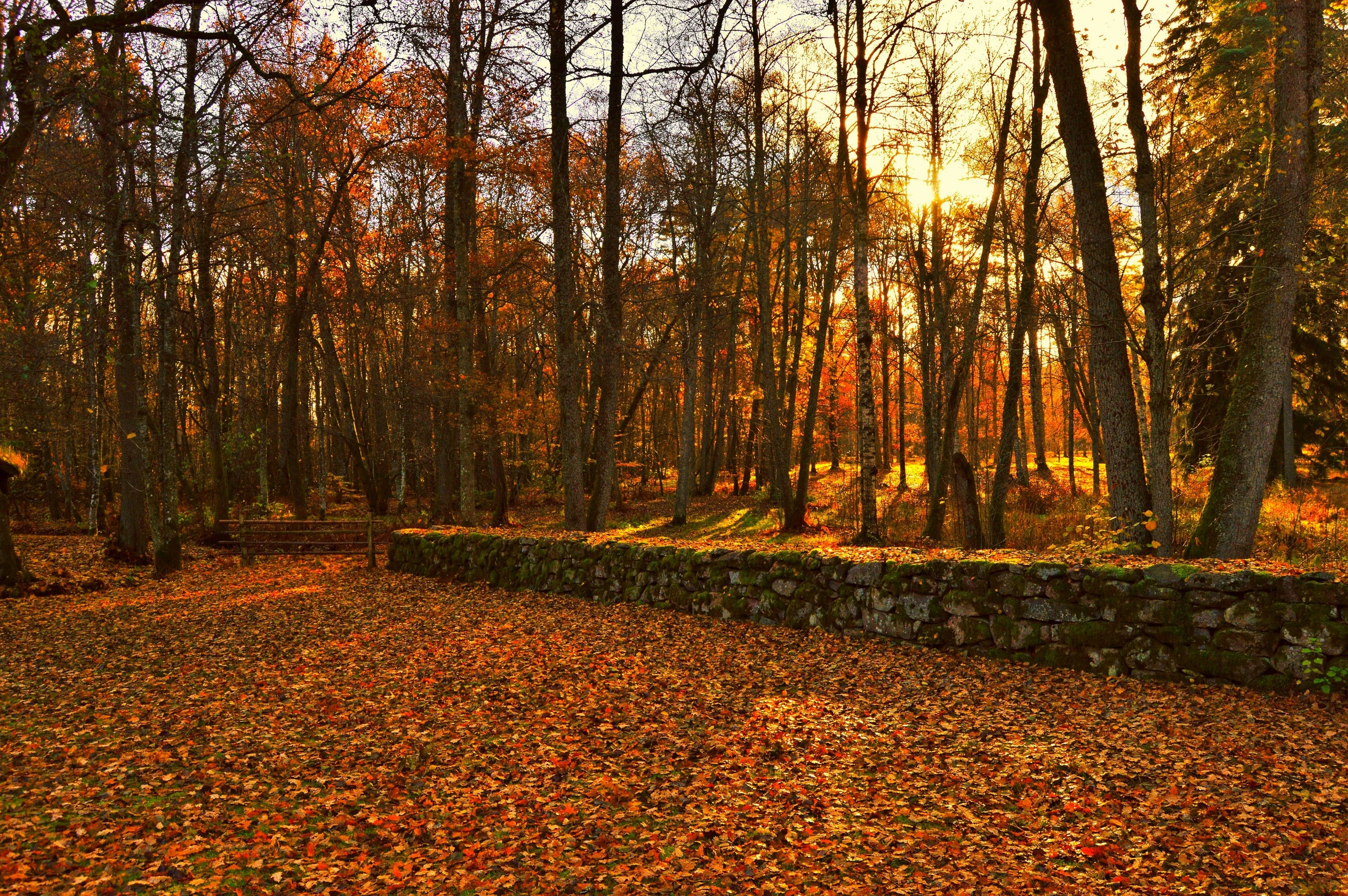 Free stock photo of forest, nature, stone wall, sun