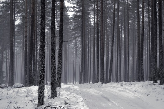 Free stock photo of snow, road, nature, forest