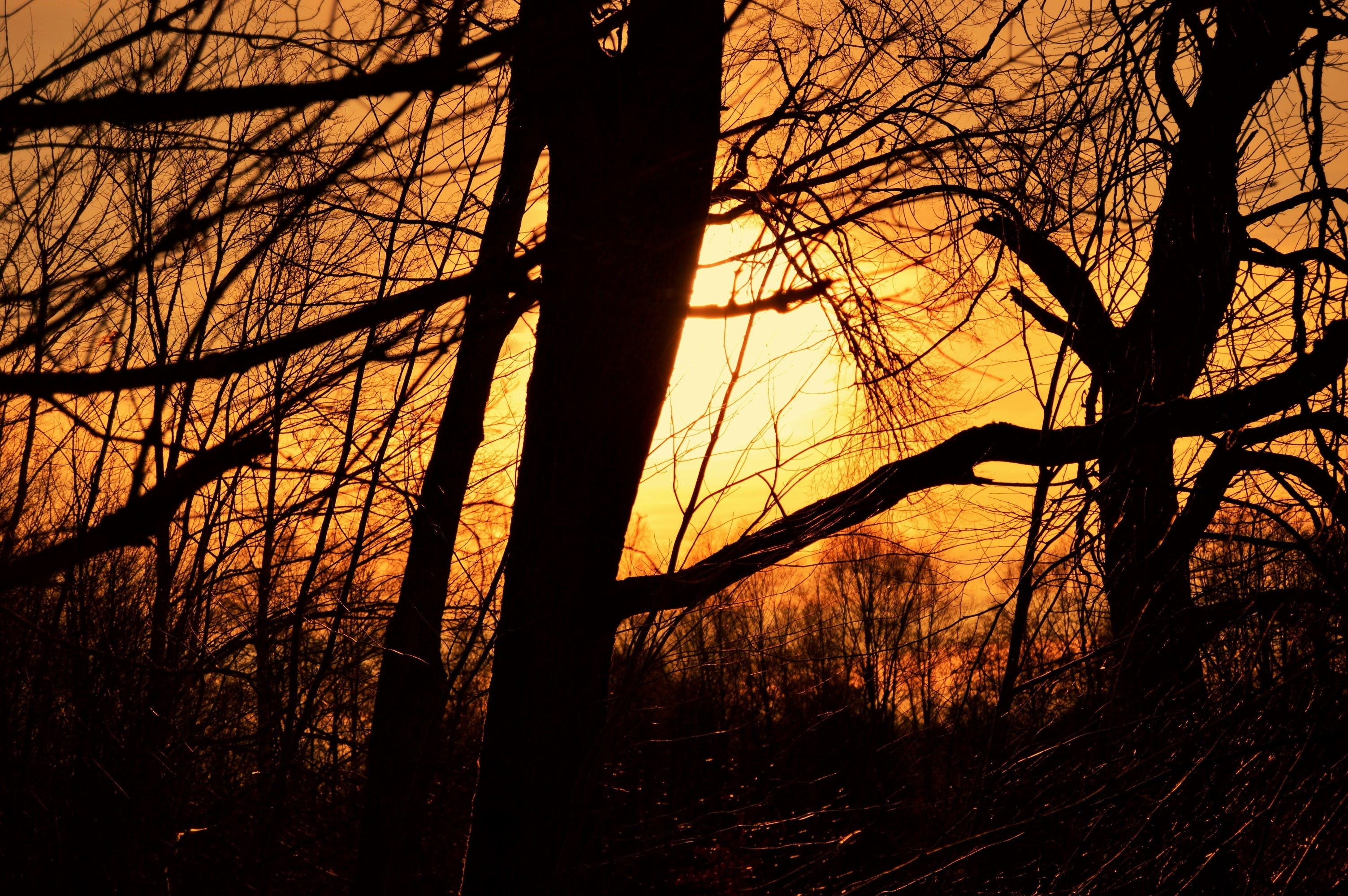 Free stock photo of nature, sunset, sun, forest