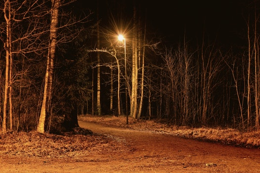 Free stock photo of nature, night, forest, trees