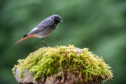 Black and Gray Bird on Brown Tree Branch