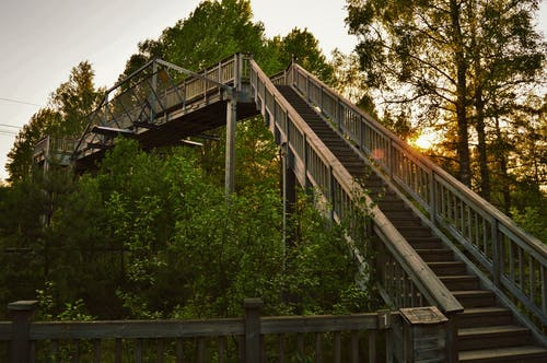 Free stock photo of forest, national park, nature, stair