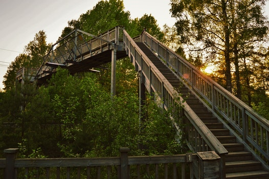 Free stock photo of stairs, nature, forest, trees
