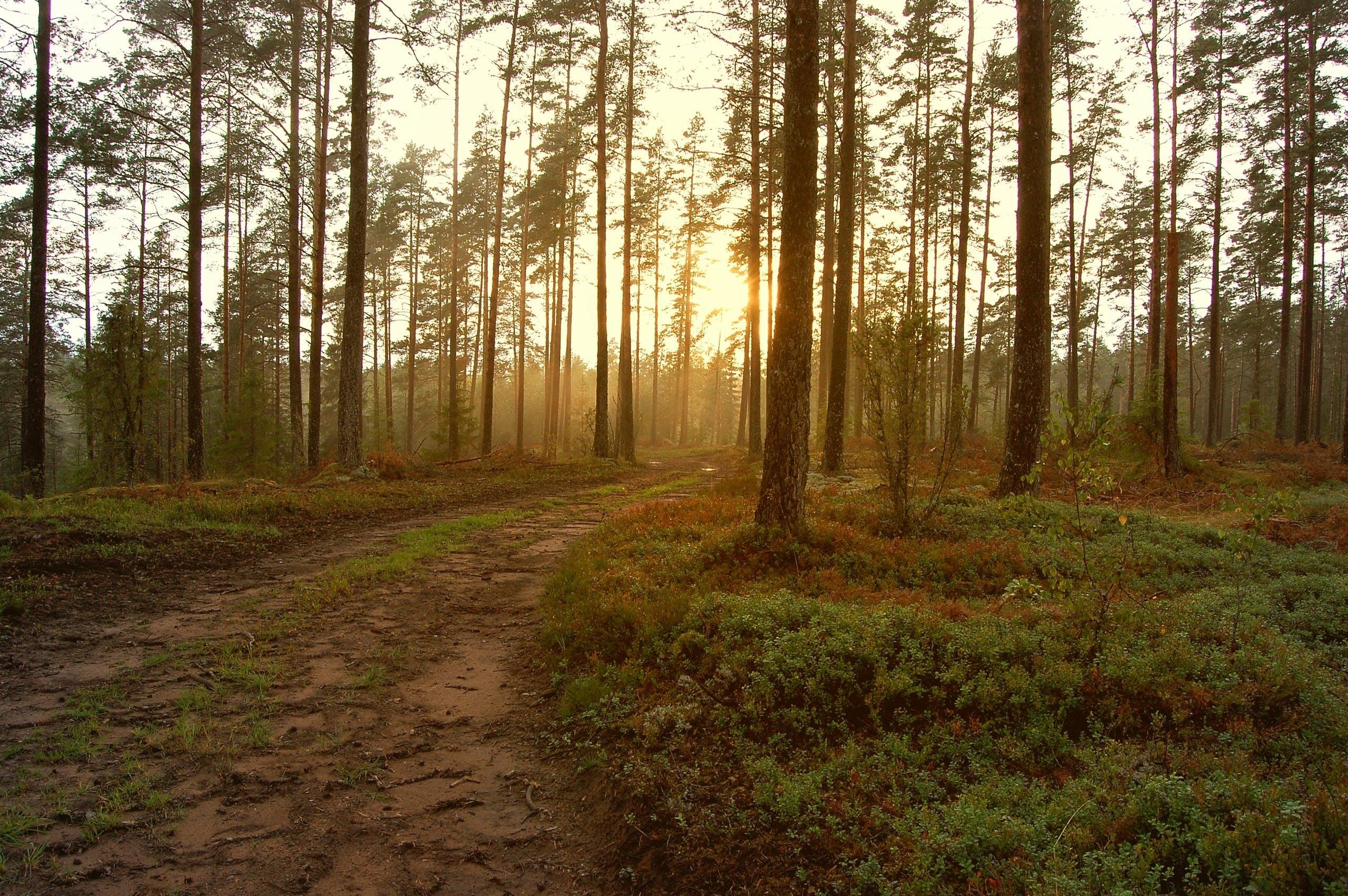Foto d'estoc gratuïta de alba, arbres, boira, bon temps