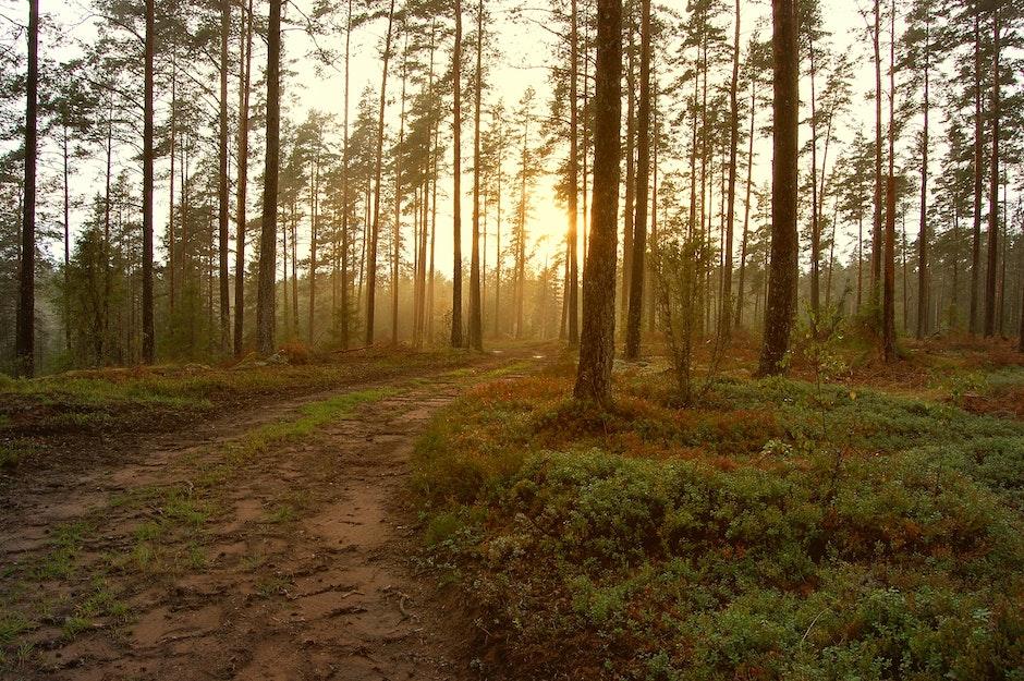 autumn, dawn, daylight