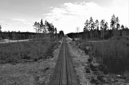 Free stock photo of forest, nature, railway