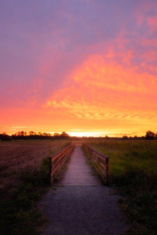 Brown Wooden Pathway Between Green Grass Field during Sunset