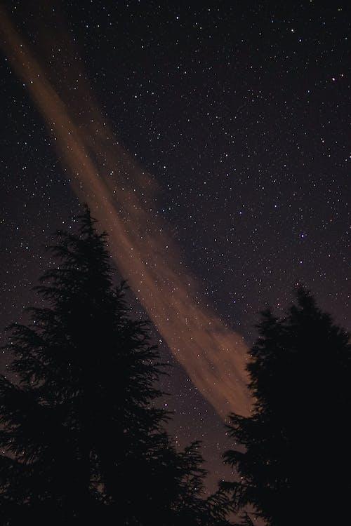 갤럭시, 나무, 밤의 무료 스톡 사진