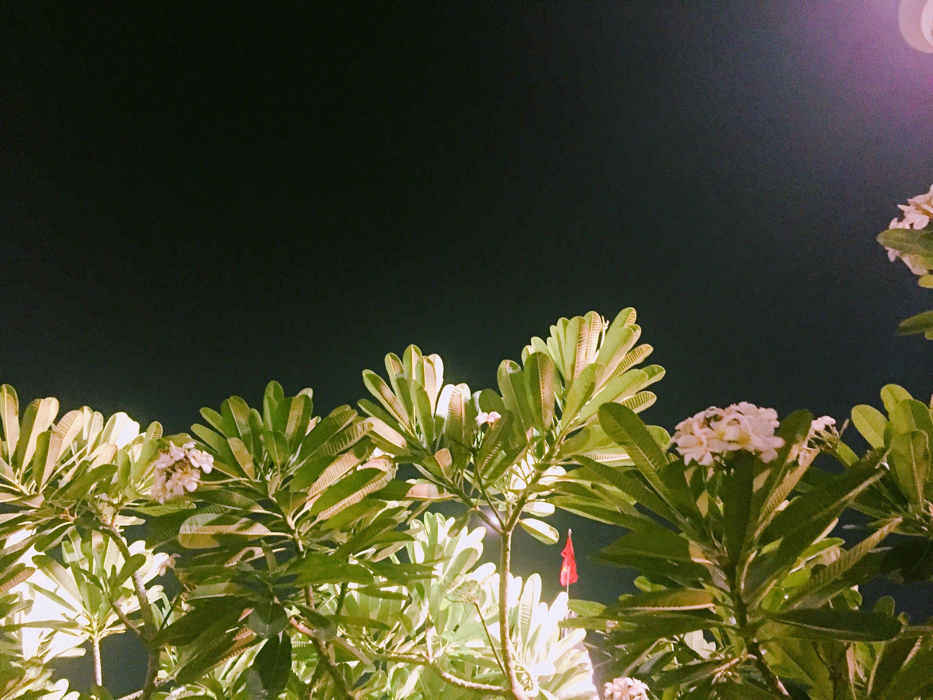 Free stock photo of midnight, nature photography, vietnam