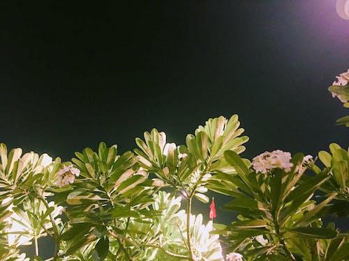 Ilmainen kuvapankkikuva tunnisteilla keskiyö, luontokuvaus, vietnam