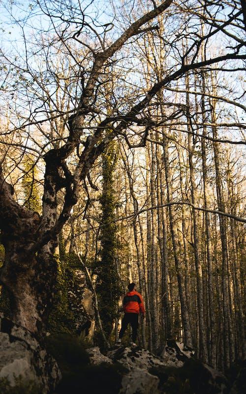 ahşap, ayakta adam, doğa yürüyüşü, Fotoğraf içeren Ücretsiz stok fotoğraf