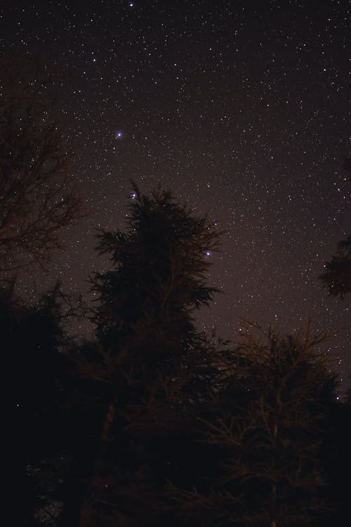 ağaç, akşam, astronomi, ay içeren Ücretsiz stok fotoğraf