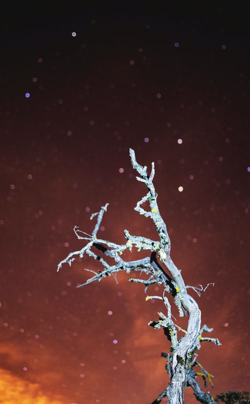 Free stock photo of blur background, blurred, dead wood, milkyway