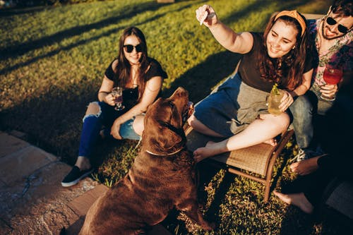 Cheerful young plumb woman in casual clothing resting in park surrounded by friends and playing with dog with bright smile