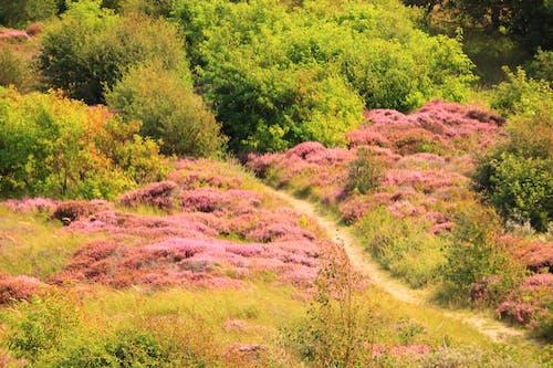 Kostenloses Stock Foto zu nationalpark, pflanzen, sommer
