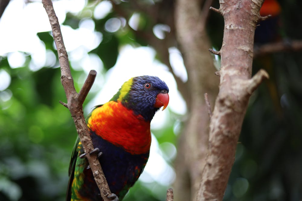 A parrot perched on a tree branch.   Photo: Pexels