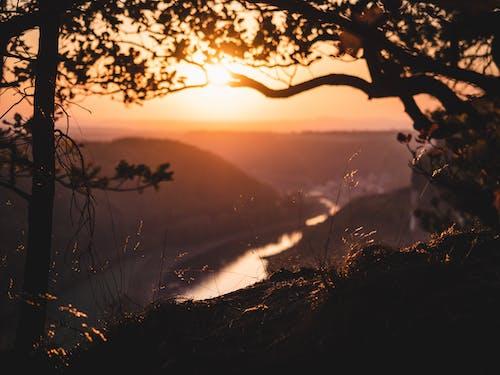 Kostnadsfri bild av flod, gröna löv, gyllene ljuset, gyllene timmen