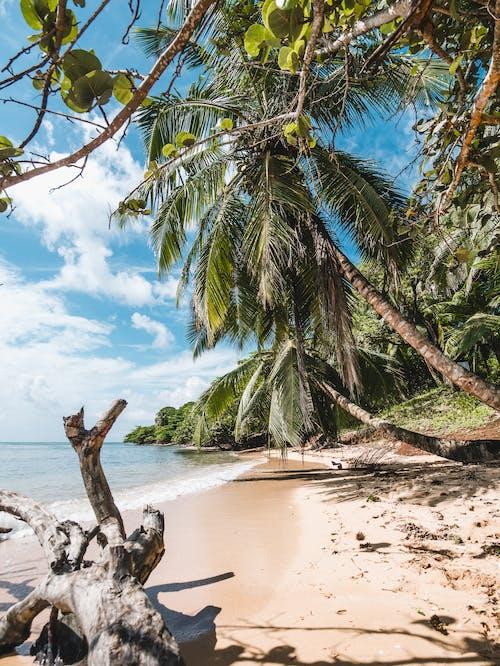 Foto d'estoc gratuïta de aigua, arbre, cel blau, coco