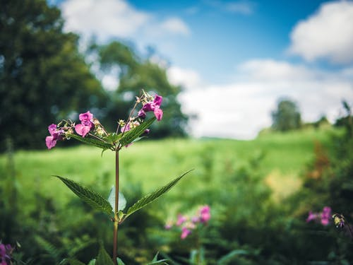 Free stock photo of blue sky, bokeh, field of flowers, flower