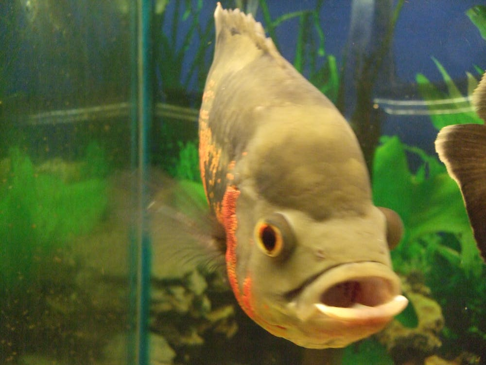 Free stock photo of aquarium, eyes, fish