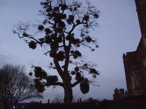 Free stock photo of bird nest, night sky