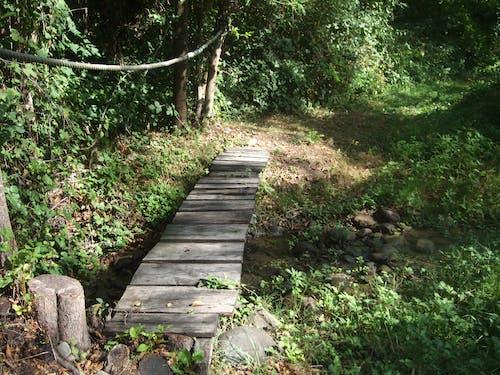 Free stock photo of mystery, secret, wooden bridge
