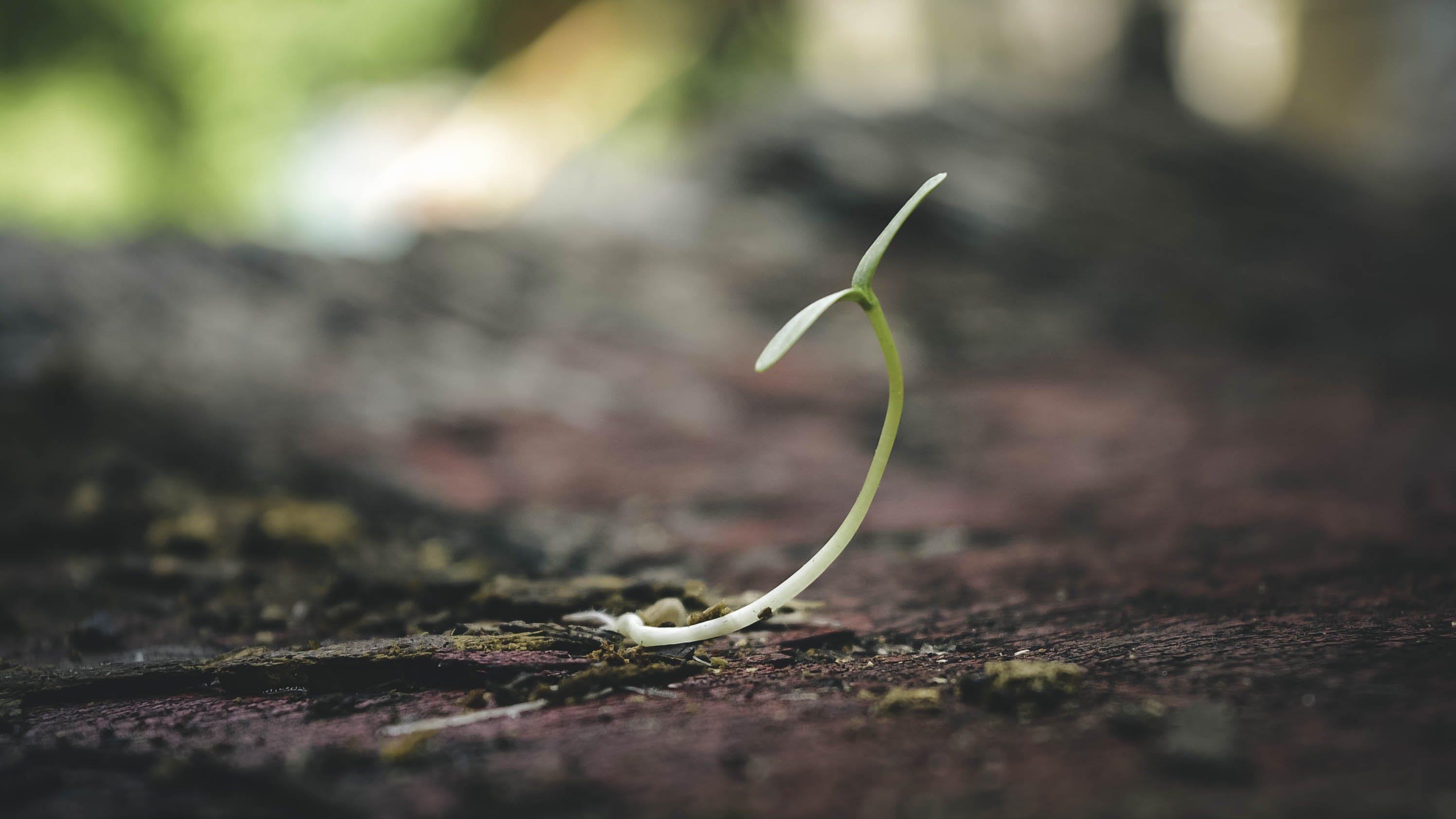 Kostenloses Stock Foto zu pflanze, verschwimmen, boden, wachstum