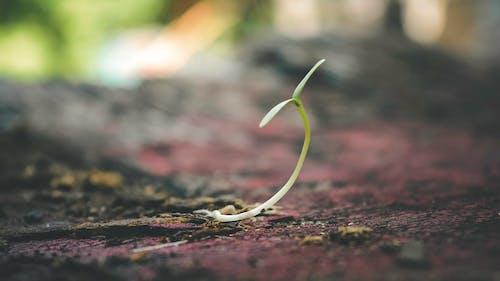 คลังภาพถ่ายฟรี ของ กล้าไม้, การเจริญเติบโต, ความชัดลึก, ชีวิต