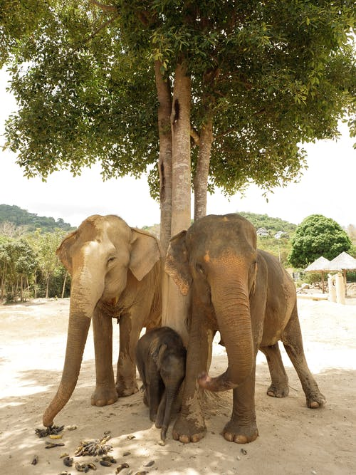 Group of Elephants Leaning on Tree