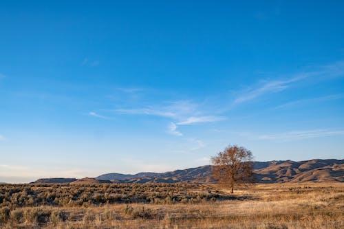Immagine gratuita di alba, albero, arido