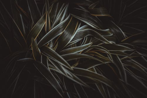 Gratis lagerfoto af græs, have, mørk, natur