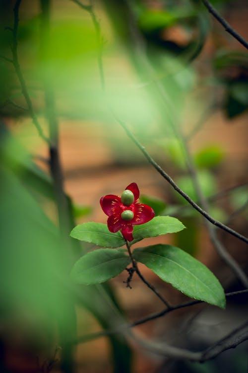 Ilmainen kuvapankkikuva tunnisteilla kahvi, kauniit kukat, luonto, puutarha