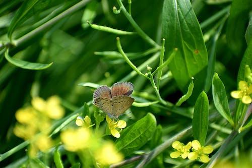 Darmowe zdjęcie z galerii z kwiat, makro, motyl, na zewnątrz