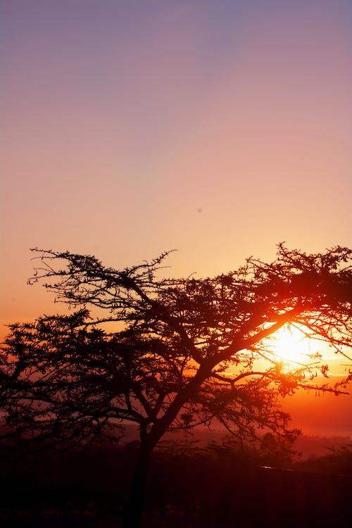 Free stock photo of sunrise behind tree