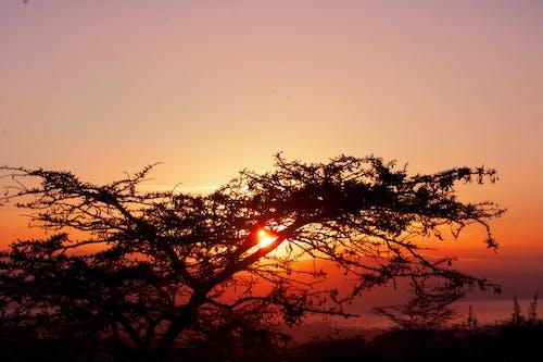 Free stock photo of sunrise