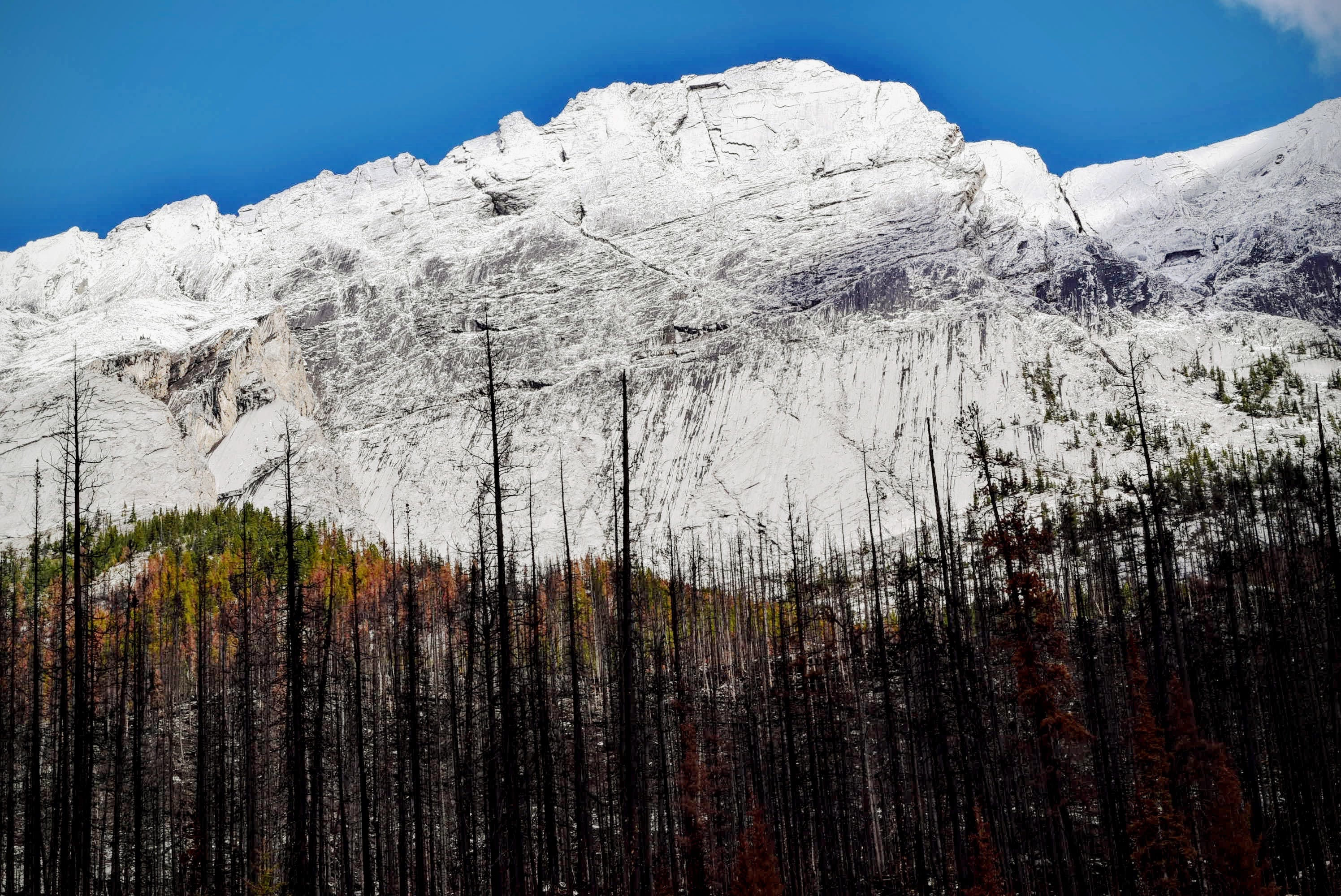 Trees Near Snow Covered Mountain during Daytime