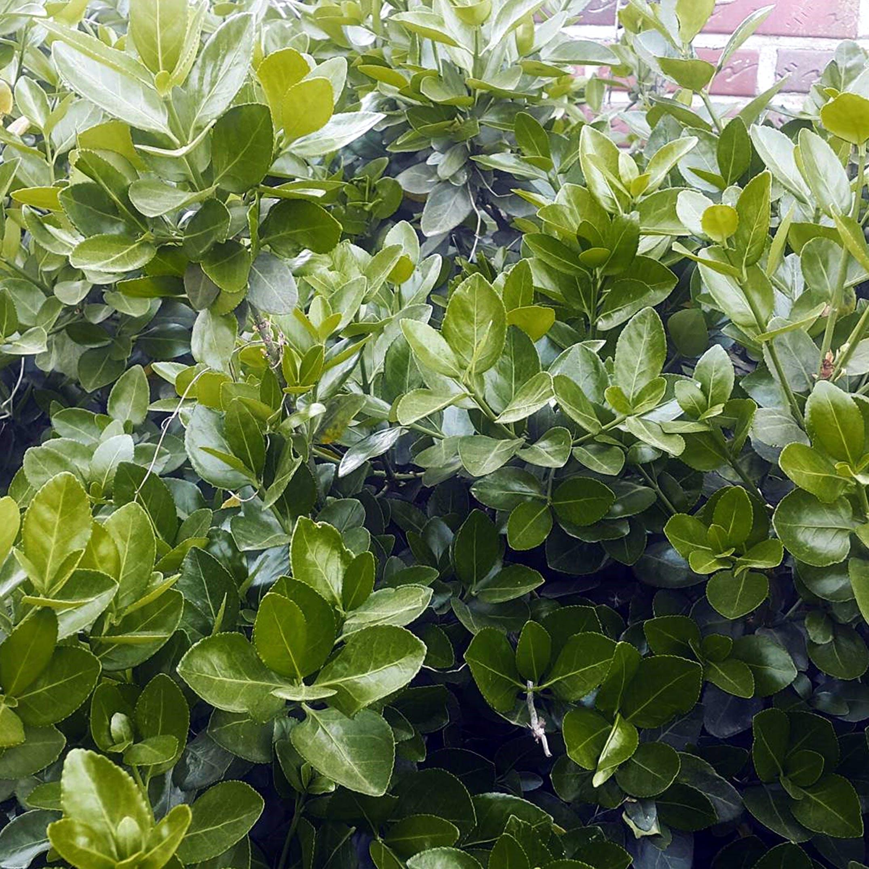 Gratis lagerfoto af grøn, grønne treen