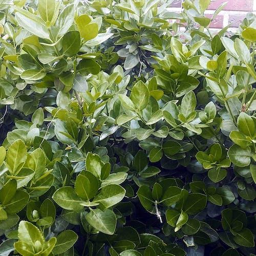 Immagine gratuita di albero, verde, verde treen