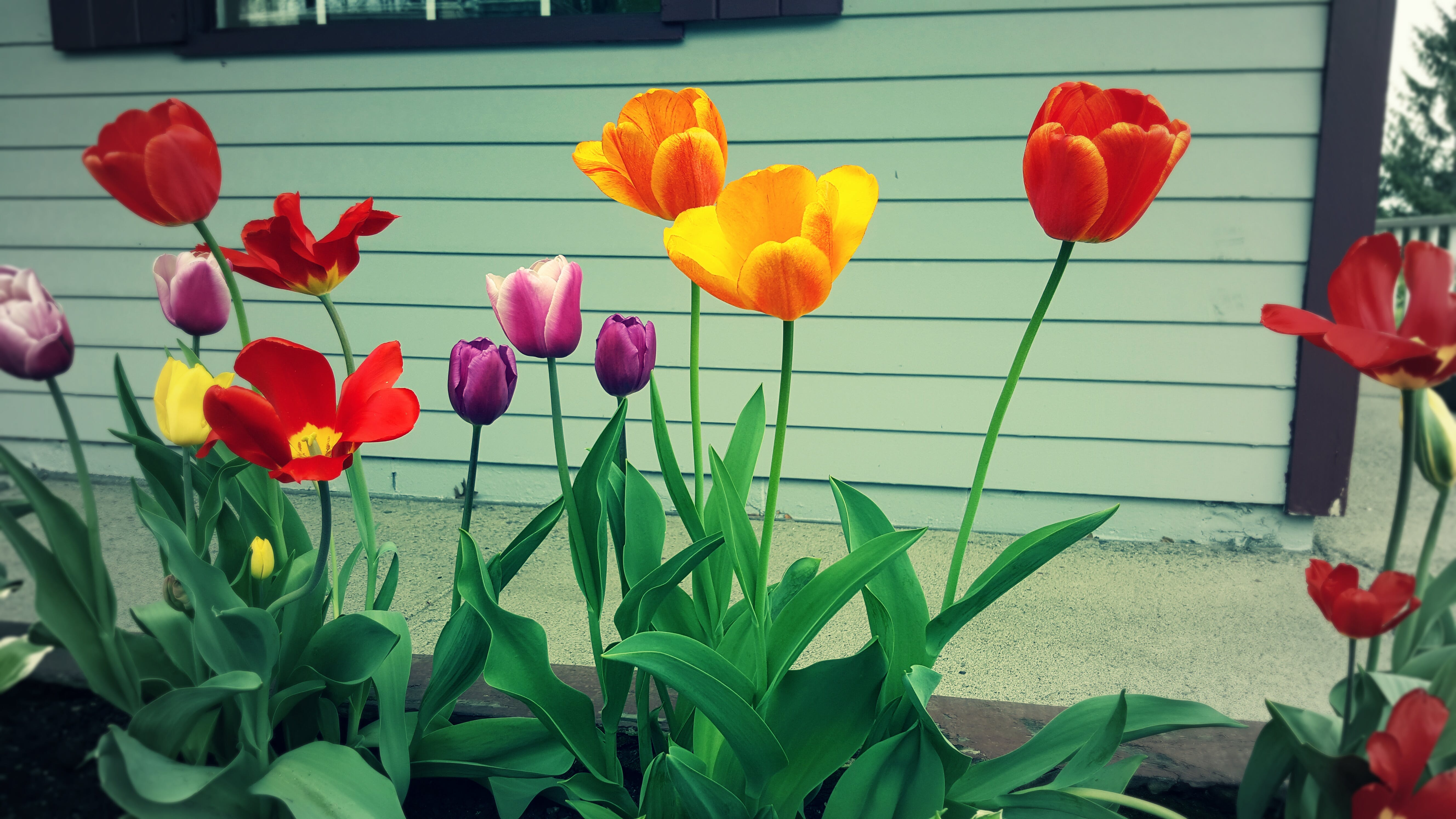 Free stock photo of beautiful flowers, colors, green, landscape