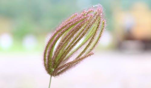 Foto profissional grátis de close, ervas, ervas daninhas, foco close-up