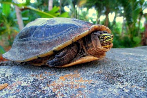 Foto profissional grátis de animais terrestres, bolaang mongondow, fotografia animal, fotografia de animais