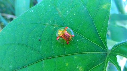 Foto profissional grátis de coisas estranhas, floresta, floresta verde, fotografia de insetos