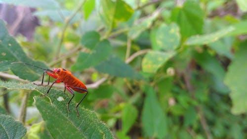 Foto profissional grátis de floresta, fotografia de insetos, indonésia maravilhosa, inseto