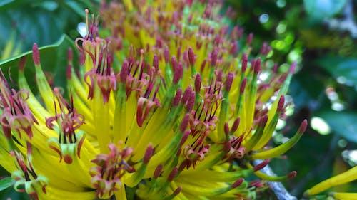 Foto profissional grátis de bolaangmongondow, flor silvestre, flores desabrochando, floresta